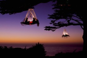 Tree camping with VIP escort