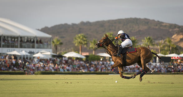 Polo events with elite escort